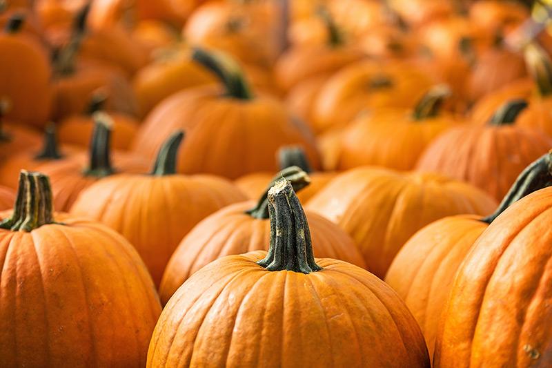 pumpkin-peel
